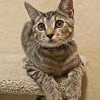 Adopt A Pet :: Chille Pepper - Orlando, FL