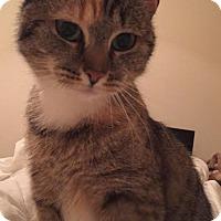 Adopt A Pet :: Candy - Fairfax, VA