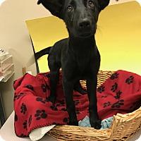 Adopt A Pet :: Jezzebelle - Decatur, AL