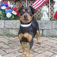 Adopt A Pet :: Etti - West Chicago, IL