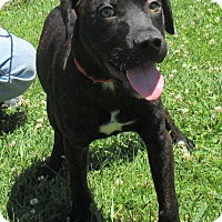 Adopt A Pet :: Ernie - Reeds Spring, MO