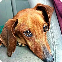 Adopt A Pet :: Jensen - Andalusia, PA
