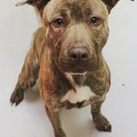 Adopt A Pet :: Louie - Stray - Wilkes Barre, PA