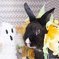 Adopt A Pet :: Oreo - Montclair, CA