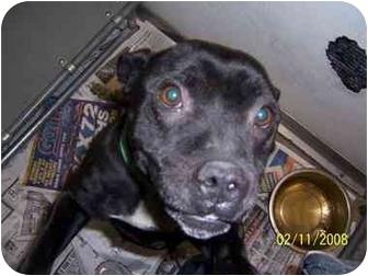 Boston Terrier/Pug Mix Dog for adoption in Grant Park, Illinois - Maizie