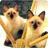 Adopt A Pet :: Kobe & Korbin - Arlington, VA