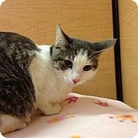Adopt A Pet :: Larry - Modesto, CA