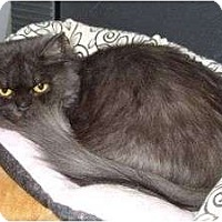Adopt A Pet :: Jeannie - Anchorage, AK