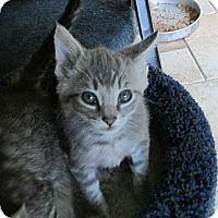 Adopt A Pet :: Pasha - Acme, PA