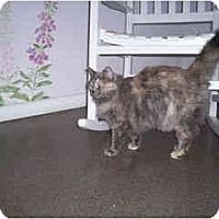 Adopt A Pet :: Dutchess - Scottsdale, AZ