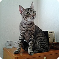 Adopt A Pet :: Jerry - Modesto, CA