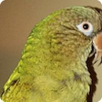 Adopt A Pet :: Cheekie - Asheville, NC