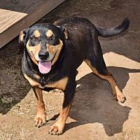 Adopt A Pet :: Dicksey - Iola, TX