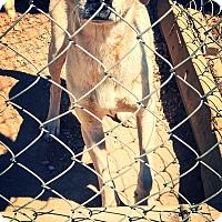 Adopt A Pet :: Saint - Odessa, TX