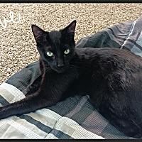 Adopt A Pet :: Romeo - Aliso Viejo, CA