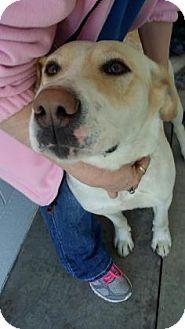 Labrador Retriever Mix Dog for adoption in Paducah, Kentucky - Nilla