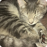 Adopt A Pet :: Fritz - Roseburg, OR