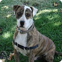 Adopt A Pet :: Charlie - Los Olivos, CA
