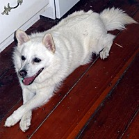 Adopt A Pet :: Rudy of Tallahassee, FL - Bradenton, FL
