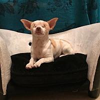 Adopt A Pet :: Davey - San Francisco, CA
