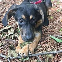 Adopt A Pet :: Monroe - CUMMING, GA