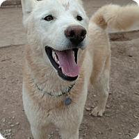 Adopt A Pet :: Wizard - Cedar Crest, NM