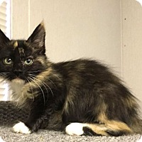 Adopt A Pet :: Rikku - Savannah, GA