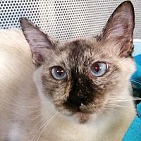 Adopt A Pet :: Freckles - Sarasota, FL