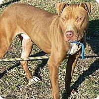 Adopt A Pet :: Ben - Ridgely, MD