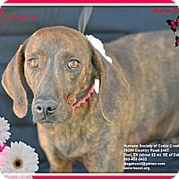 Adopt A Pet :: Renee - Plano, TX
