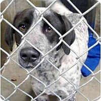 Adopt A Pet :: Travis - Emory, TX