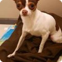 Adopt A Pet :: Burrito - Shawnee Mission, KS