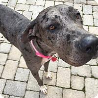 Adopt A Pet :: Polo - Manassas, VA