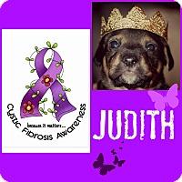 Adopt A Pet :: Judith - Fredericksburg, VA