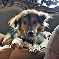 Adopt A Pet :: Quicksilver - Bruce Township, MI