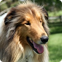 Adopt A Pet :: Odin - Powell, OH