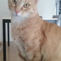 Adopt A Pet :: Luna - Mesa, AZ