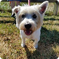 Adopt A Pet :: Fergus - Oak Ridge, NJ