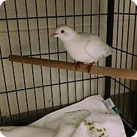 Adopt A Pet :: Dan - Alexandria, VA