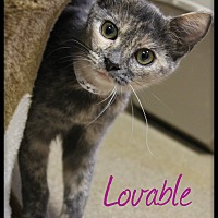 Adopt A Pet :: Lovable - Euclid, OH