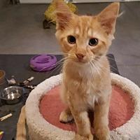 Adopt A Pet :: Benny - Rochester, MN
