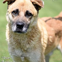 Adopt A Pet :: Burt - Newnan City, GA