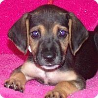 Adopt A Pet :: Celeste - Phillips, WI
