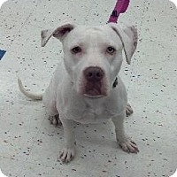 Adopt A Pet :: Stella - Rochester, NY