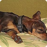 Adopt A Pet :: Sookie - Winchester, CA