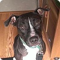 Adopt A Pet :: Ruby - WARREN, OH