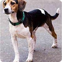 Adopt A Pet :: Stitch - Portland, OR
