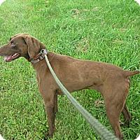 Adopt A Pet :: #246-14  @ Animal Shelter - Zanesville, OH