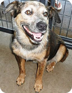 Cattle Dog Mix Dog for adoption in Dover, Tennessee - Larry