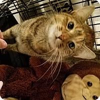 Adopt A Pet :: Spottedpaw - Geneseo, IL